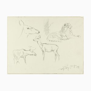 Study of Animals - Original Pencil Drawing by Willy Lorenz - 1940s 1940s