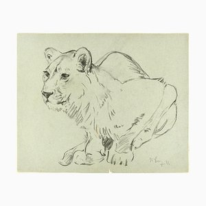 Crouched Lioness and Rabbits - Original Pencil Drawing by Willy Lorenz - 1971 1971