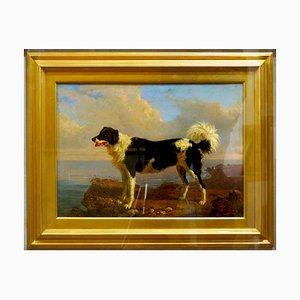 Dog - Öl auf Leinwand von Filippo Palizzi - Zweite Hälfte des 19. Jh. 1950-1860