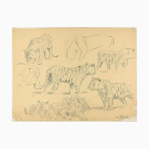 Studies of Tigers - Original Charcoal Drawing by Willy Lorenz - Mid 20th Century Mid 20th Century
