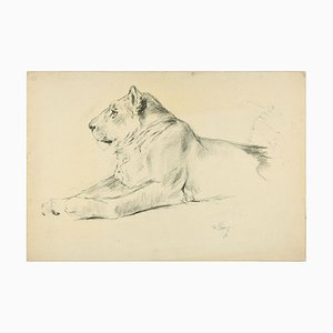 Lioness - Dibujo original a lápiz de Willy Lorenz - años 40