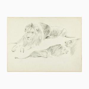 Study of Lions - Original Bleistiftzeichnung von Willy Lorenz - 1950er 1950er