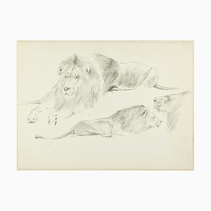 Study of Lions - Original Pencil Drawing by Willy Lorenz - 1950s 1950s