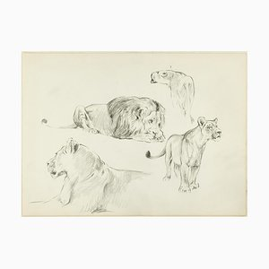 Study of Felines - Original Pencil Drawing by Willy Lorenz - 1950s 1950s
