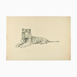 Laying Down Tiger - Original Bleistiftzeichnung von Willy Lorenz - 1950er 1950er