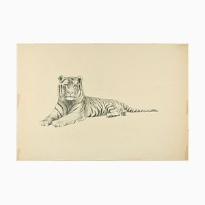 Lying Down Tiger - Original Pencil Drawing by Willy Lorenz - 1950s 1950s