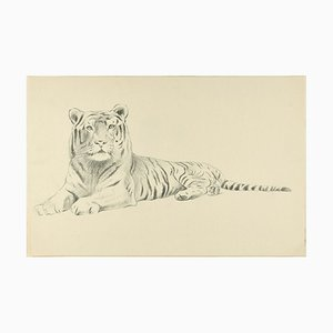 Sketch of a Tiger - Original Pencil Drawing by Willy Lorenz - 1950s 1950s