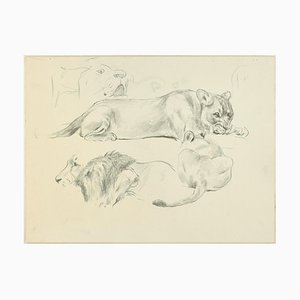 Löwen - Original Bleistiftzeichnungen von Willy Lorenz - Mid 20th Century Mid 20th Century