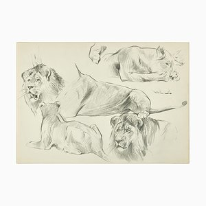 Sketch of Lions - Original Pencil Drawing by Willy Lorenz - Mid 20th Century Mid 20th Century