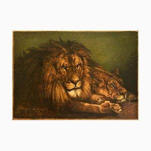 Lion and Lioness - Huile sur Toile d'Origine Début 20ème Siècle Début 20ème Siècle