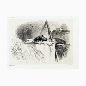 Pigeon - Original Lithograph by Karl Bodmer - Late 19th Century Late 19th Century
