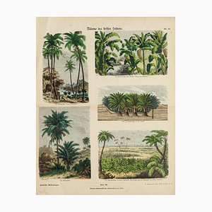 American Trees - Etching - 19th Century 19th Century