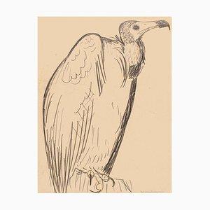 Dessin au crayon Original The Condor - Milieu 20ème Siècle 20ème Siècle