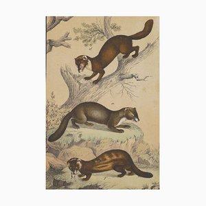 Lithographie A Hunting Scene - Lithographie Originale - Fin 19ème Siècle, Fin 19ème Siècle