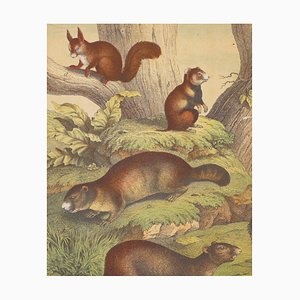 Squirrels - Original Lithograph - Late 19th Century Late 19th Century