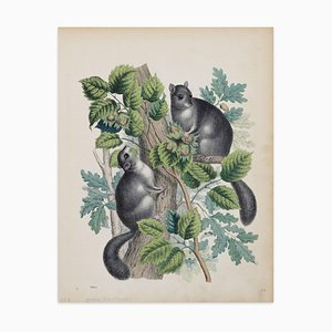 Squirrels with Hazelnuts - Original Lithograph - 1860 1860