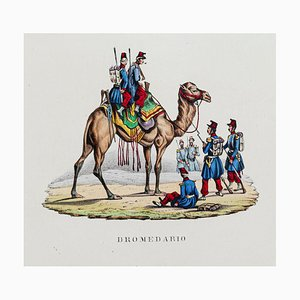 Dromedary - Original Hand Colored Lithograph - 19th century 19th century