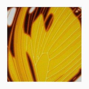 Gelber Schmetterlingsflügel - Original Öl auf Leinwand von Giuseppe Restano - 2009 2009