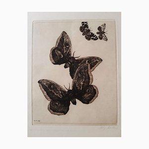 Grabado Original Vier Schmetterlinge de Richard Muller - 1899-1899