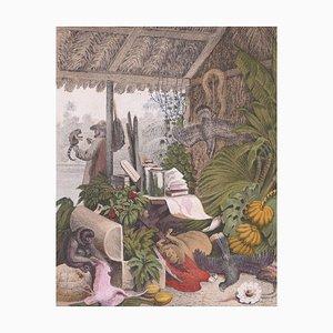 Exotic Animals - Litografia originale di Emil Hochdanz- 1866 1866