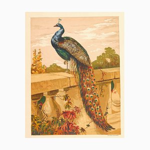 A Peacock - Original Chromelihtograph late 19th Century 1870/80s