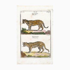 Couple of Wild Cats - Original Etching - 17th Century 17th Century