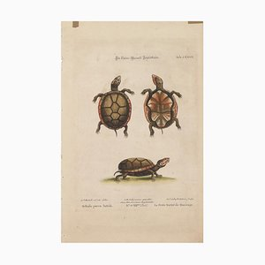 Turtles - Original Lithograph by George Edwards - 19th Century 19th Century