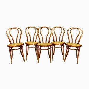 Bistro Chairs by Jacob & Josef Kohn, 1930s, Set of 5