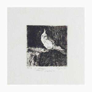 Parrot - Original Etching on Paper by Valerio Cugia - 1995 1995