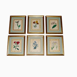 Botanical Flower Engravings, Set of 6