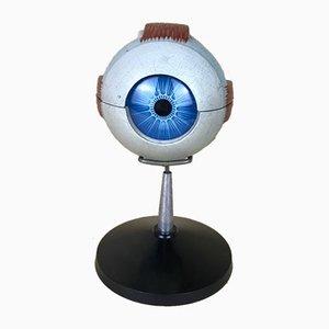 Anatomisches italienisches Vintage Modell des linken Auges aus Kunststoff von Paravia, 1960er