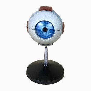 Vintage Italian Anatomical Human Left Eye Model in Plastic from Paravia, 1960s