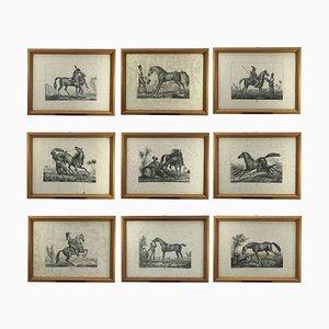 Antique Horses Prints by Luigi Giarré, 1822, Set of 10