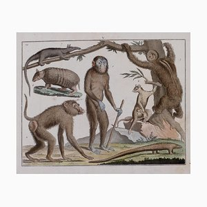 Animals - Original Lithograph by George Edwards - 19th Century 19th Century