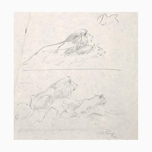 Lions - Original Drawing in Pencil by Willy Lorenz - 1958 1958