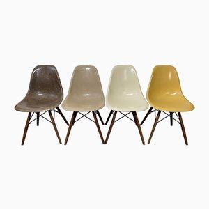 Mid-Century DSW Esszimmerstühle aus Nussholz von Charles & Ray Eames für Herman Miller, 4er Set