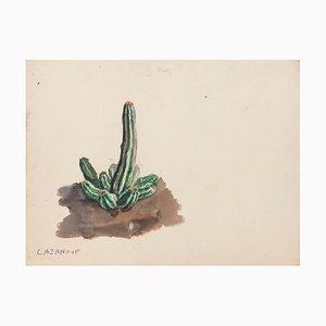 Kaktus Aquarell und Bleistift auf elfenbeinfarbenem Papier von R. Cazanove
