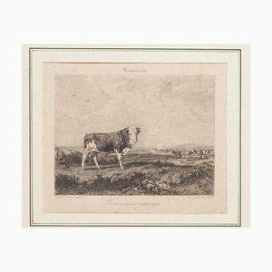 Taurus at Pasture Original Radierung von Gustave Greux & A. Salmon, 1880