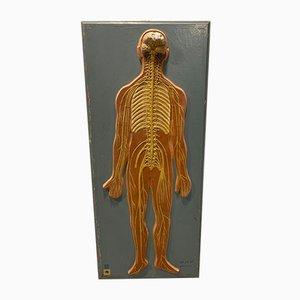 DDR Wooden Medical Sign, 1950s
