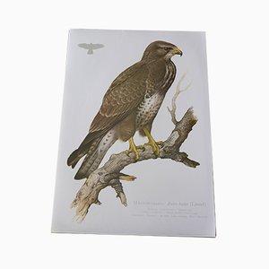 Impresión vintage de pájaros de Ludwig Binder para Kronen Verlag & Erich Cramer, años 80