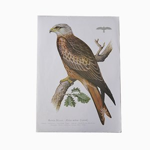 Vintage Bird Animal Print by Ludwig Binder for Kronen Verlag & Erich Cramer, 1980s