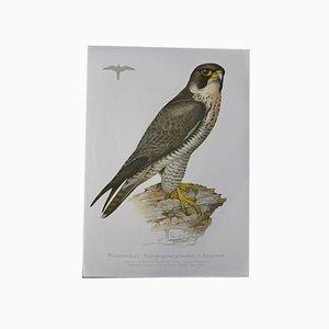 Vintage Bird Print by Ludwig Binder for Kronen Verlag & Erich Cramer, 1980s