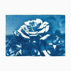 Rose bleue et blanche, 2020, cyanotype