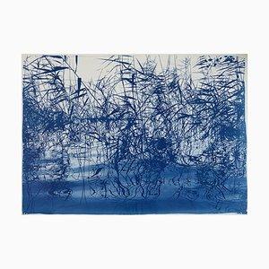 Mystic Louisiana Marsh, 2019, Cyanotype