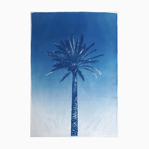Nile River Palm, Cyanotype on Watercolor Paper, 2019