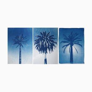 Desert Palm Trio, Cyanotypie auf Aquarellpapier, 2019