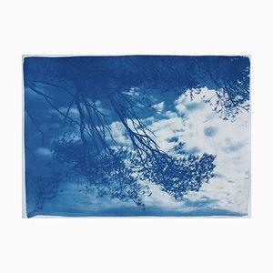 Malibu Kiefer-Meerblick, Cyanotypie, 2019