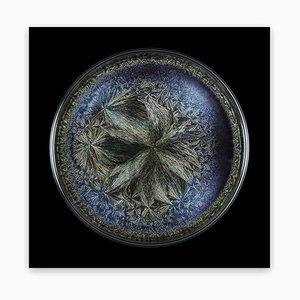 Morphogenetic field - Beluga Caviar (Medium) 2016