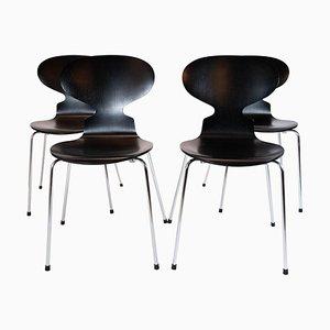 Black Ant Modell 3101 Esszimmerstühle von Arne Jacobsen für Fritz Hansen, 2002, 4er Set