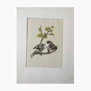 Sperling, Sparrow, Aquarelle